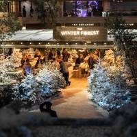 Broadgate Winter Forest