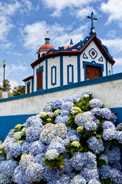 7. Hydrangeas in the Azores