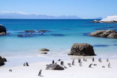 10. Boulders Beach, South Africa