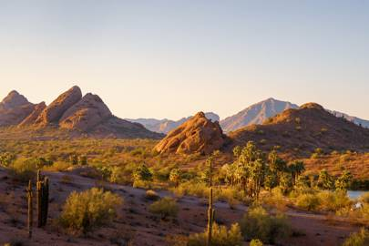 12. Phoenix