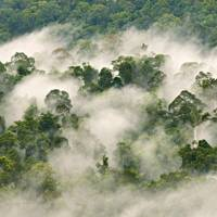 The rainforests of Borneo