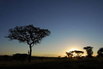 Following the Serengeti Migration
