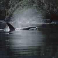 17. Vancouver Island