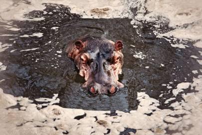 The wildlife of Selous Game Reserve, Tanzania