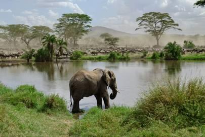 41. Serengeti National Park, Tanzania