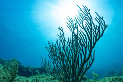 9. KEY LARGO: DIP INTO THE DIVING CAPITAL OF THE WORLD