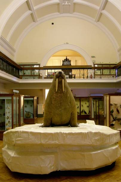 Horniman Museum, Forest Hill, London