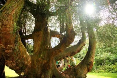 Trelissick Gardens, Cornwall