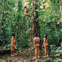 Exploring the Amazonian forest