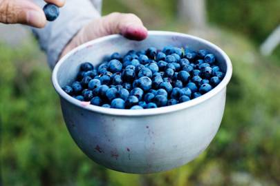THE WILD SWEDISH SUPERFOOD