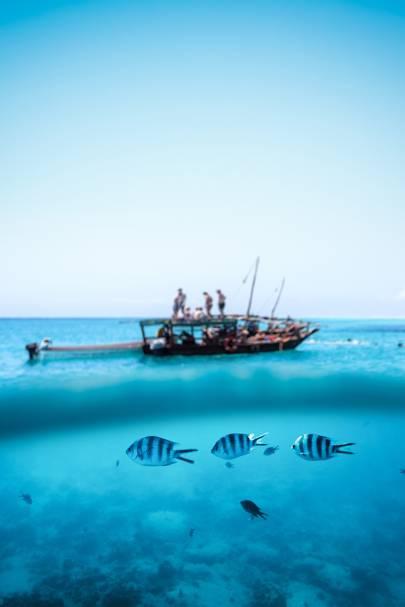22. MNEMBA ISLAND, TANZANIA