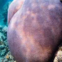 Fish around Ningaloo Reef