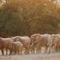 Wildlife in the Luangwa River Valley