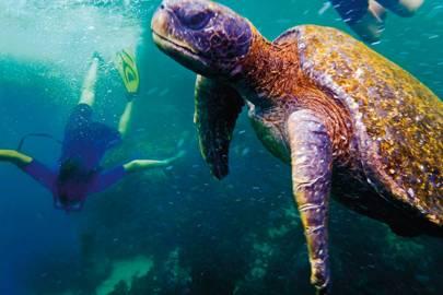 Sailing the Galápagos Islands