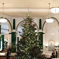 Rocking around The Ned's Christmas Tree