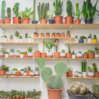 Stock up on succulents