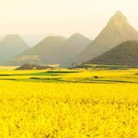 Luosi Field, Luoping, China