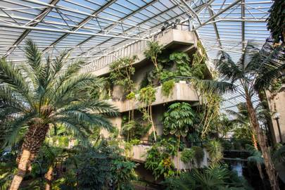 Barbican Conservatory, Central