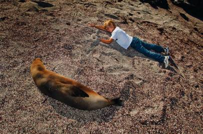 Marine life on the Galápagos Islands