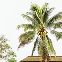 19. Jamaica