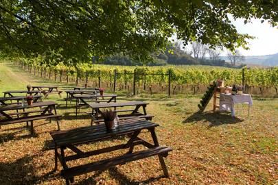 Terlingham Vineyard, Kent