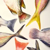 12. Learn about the latest way of eating sustainably - gill-to-fin