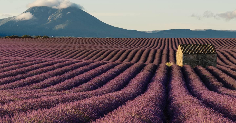 Provence Lavender Fields Where To See France S Best Lavender Cn Traveller
