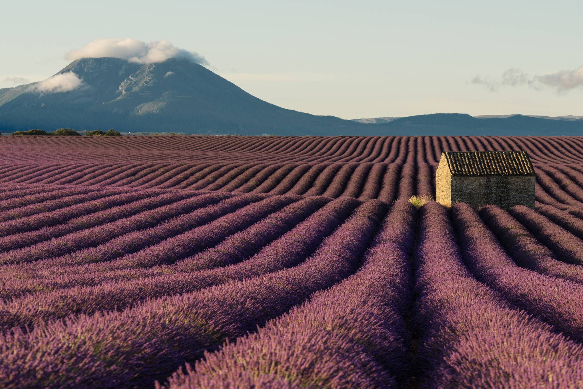 A road trip through Provence's lavender fields