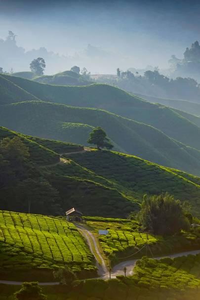 1. Darjeeling, India