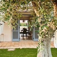 Among olive trees in Puglia