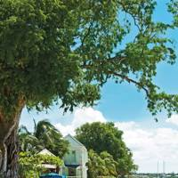 16. Barbados