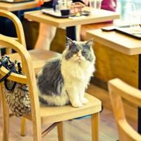 Lady Dinha's Cat Emporium