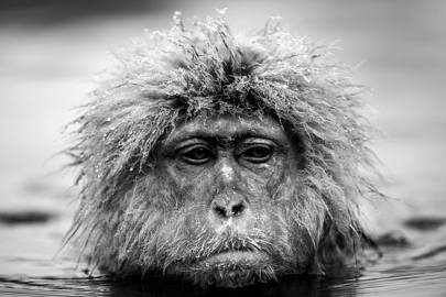David Yarrow: Recent Encounters