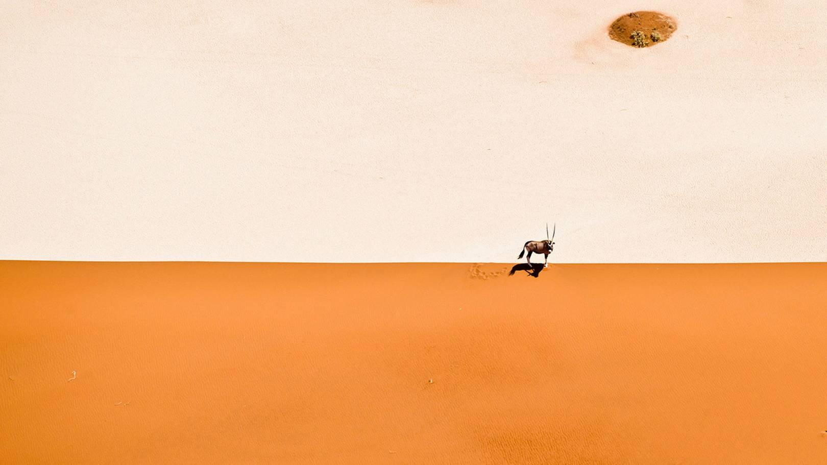 Behind the scenes of photographer David Yarrow's wildlife shots