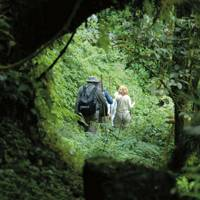 The capital, Kigali and the country's mountain gorillas