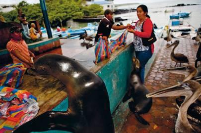 Nature on Galápagos Islands