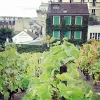 Montmartre Wine Harvest Festival