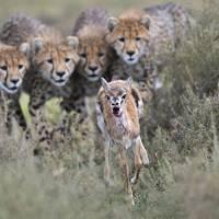 Wildlife Photographer of the Year Awards 2012: Serengeti