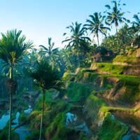 Bali: Pray