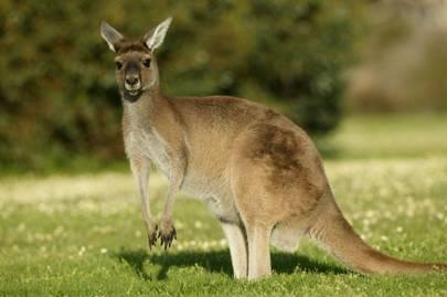 Exploring Kangaroo Island by car
