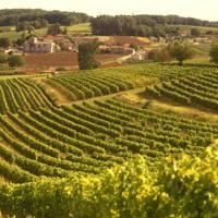 Wine-tasting in France