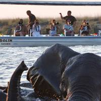 Safari season: Botswana
