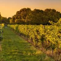 Astley Vineyard, Worcestershire