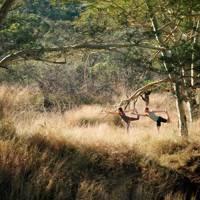 Safari season: South Africa
