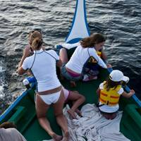 Dophin safari