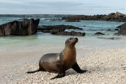 Genovesa Island, Galápagos