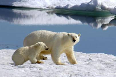 Join the Arctic Circle