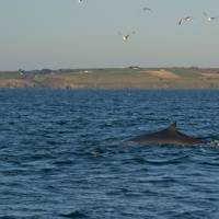 Whale-watching, West Cork