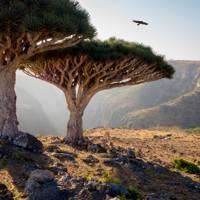 42. Socotra, Yemen