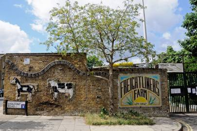 13. FREIGHTLINERS CITY FARM